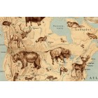 North America map 1928, animals